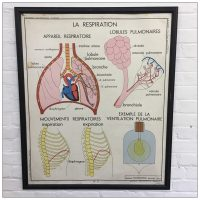 French Rossignol School Anatomical Poster