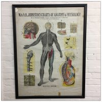 A K Johnston Anatomical Chart - Nervous System