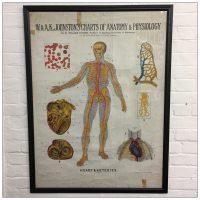 A K Johnston Anatomical Chart - Heart